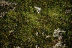 Φρέσκος πράσινος τοίχος βρύου στοκ φωτογραφίες με δικαίωμα ελεύθερης χρήσης