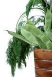 φρέσκος πράσινος φασολιών στοκ εικόνα