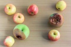 φρέσκος σάπιος μήλων Στοκ Εικόνα