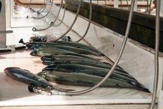 Φρέσκος σολομός Στοκ φωτογραφία με δικαίωμα ελεύθερης χρήσης