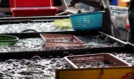 Φρέσκος στάβλος γαρίδων στην αγορά Στοκ εικόνες με δικαίωμα ελεύθερης χρήσης