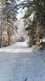 Φρέσκος την ημέρα Στοκ φωτογραφίες με δικαίωμα ελεύθερης χρήσης