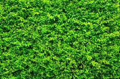 Φρέσκος τοίχος φυτών Στοκ Φωτογραφίες