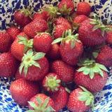 Φρέσκος φραουλών της βόρειας Καρολίνας που επιλέγεται Στοκ Εικόνες