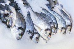 φρέσκος;; ψάρια Στοκ Εικόνες