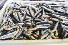 φρέσκος;; ψάρια Στοκ Φωτογραφία