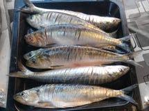 φρέσκος ψαριών που ψήνετα&iot Στοκ φωτογραφία με δικαίωμα ελεύθερης χρήσης