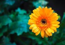 Φρέσκος όμορφος φωτεινός λουλουδιών Στοκ φωτογραφία με δικαίωμα ελεύθερης χρήσης