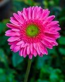 Φρέσκος όμορφος φωτεινός λουλουδιών Στοκ Εικόνα