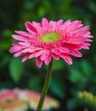 Φρέσκος όμορφος φωτεινός λουλουδιών Στοκ εικόνες με δικαίωμα ελεύθερης χρήσης