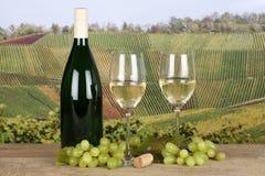 Φρέσκο άσπρο κρασί στο μπουκάλι και γυαλιά στους αμπελώνες Στοκ εικόνα με δικαίωμα ελεύθερης χρήσης