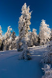 Φρέσκο δέντρο χιονιού Στοκ εικόνα με δικαίωμα ελεύθερης χρήσης