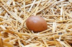 Φρέσκο αυγό κοτόπουλου Στοκ φωτογραφία με δικαίωμα ελεύθερης χρήσης