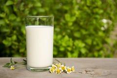 Φρέσκο γάλα στο γυαλί στο υπόβαθρο φύσης Στοκ Εικόνες