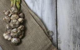 Φρέσκο επιλεγμένο σκόρδο που πλέκεται και σε έναν burlap σάκο με ένα καλάθι στοκ εικόνα με δικαίωμα ελεύθερης χρήσης