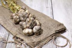 Φρέσκο επιλεγμένο σκόρδο που πλέκεται και σε έναν burlap σάκο με ένα καλάθι στοκ εικόνα