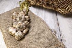 Φρέσκο επιλεγμένο σκόρδο που πλέκεται και σε έναν burlap σάκο με ένα καλάθι στοκ φωτογραφία