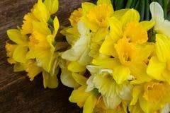 Φρέσκο ελατήριο daffodils Στοκ Εικόνα