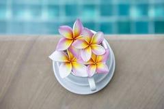 Φρέσκο ζωηρόχρωμο λουλούδι Plumeria στο άσπρο φλυτζάνι καφέ Στοκ Εικόνες