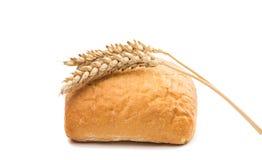Φρέσκο ιταλικό ciabatta ψωμιού με τα αυτιά του σίτου Στοκ εικόνες με δικαίωμα ελεύθερης χρήσης
