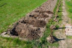 Φρέσκο κήπος-κρεβάτι Στοκ φωτογραφία με δικαίωμα ελεύθερης χρήσης