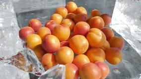 Φρέσκο καθαρό βερίκοκο και άλλα φρούτα χωρίς συντηρητικά και χημικές ουσίες στη σε αργή κίνηση περιστροφή 4k καμερών πάγου απόθεμα βίντεο