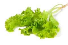 Φρέσκο και πράσινο μαρούλι Στοκ Εικόνες