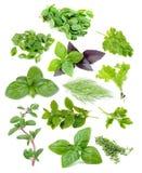 Φρέσκο και πράσινο σύνολο χορταριών Στοκ Φωτογραφία