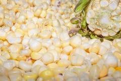 Φρέσκο καλαμπόκι στο σπάδικα με τα σιτάρια στοκ φωτογραφία με δικαίωμα ελεύθερης χρήσης