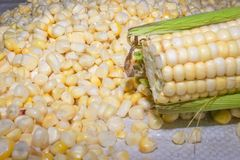 Φρέσκο καλαμπόκι στο σπάδικα με τα σιτάρια στοκ εικόνα με δικαίωμα ελεύθερης χρήσης