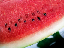 φρέσκο καρπούζι φετών Στοκ Φωτογραφίες