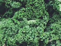 Φρέσκο κατσαρό λάχανο Στοκ φωτογραφία με δικαίωμα ελεύθερης χρήσης