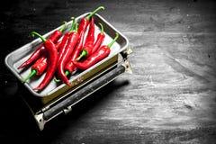Φρέσκο καυτό πιπέρι τσίλι στις κλίμακες Στοκ Εικόνες