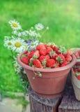 Φρέσκο καλοκαίρι strawberrys Στοκ Φωτογραφίες
