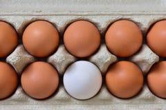 Φρέσκο κιβώτιο αυγών στοκ εικόνες