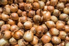 Φρέσκο κρεμμύδι στην υπεραγορά Στοκ Φωτογραφίες