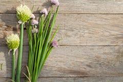 Φρέσκο κρεμμύδι άνοιξη κήπων στον πίνακα κήπων Στοκ Εικόνα