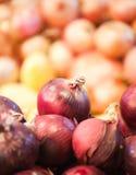 Φρέσκο κρεμμύδι αντίθετο στενό σε επάνω παντοπωλείων Στοκ Εικόνες