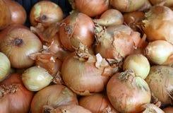 Φρέσκο κρεμμύδι βολβών στενό σε επάνω επίδειξης λιανικής αγοράς Στοκ εικόνα με δικαίωμα ελεύθερης χρήσης