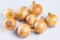 φρέσκο κρεμμύδι Στοκ φωτογραφίες με δικαίωμα ελεύθερης χρήσης