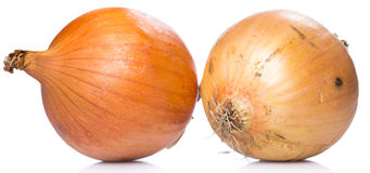 φρέσκο κρεμμύδι Στοκ Φωτογραφίες