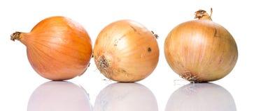 φρέσκο κρεμμύδι Στοκ Φωτογραφία