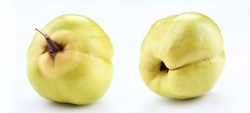φρέσκο κυδώνι κίτρινο Στοκ εικόνα με δικαίωμα ελεύθερης χρήσης