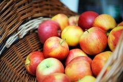 φρέσκο κόκκινο μήλων Στοκ Εικόνα