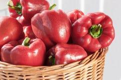 φρέσκο κόκκινο πιπεριών κ&omicr Στοκ Φωτογραφία