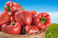 φρέσκο κόκκινο πιπεριών κ&omicr Στοκ φωτογραφία με δικαίωμα ελεύθερης χρήσης