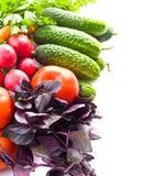 φρέσκο λαχανικό καρότων Στοκ φωτογραφία με δικαίωμα ελεύθερης χρήσης