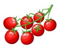 Φρέσκο λαχανικό ντοματών κερασιών από την κόκκινη ντομάτα οργανικής τροφής κήπων στην πράσινη διανυσματική απεικόνιση κλάδων που  Στοκ Εικόνες