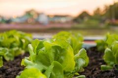 Φρέσκο λαχανικό στο υπαίθριο αγρόκτημα Στοκ φωτογραφίες με δικαίωμα ελεύθερης χρήσης