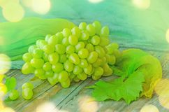 φρέσκο λευκό φύλλων σταφυλιών πράσινο απομονωμένο Πράσινα φρούτα σταφυλιών Στοκ Φωτογραφίες